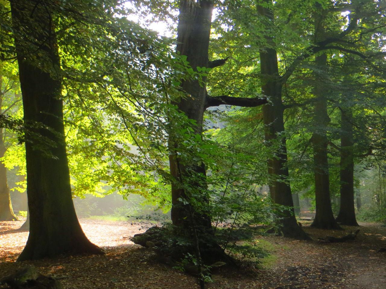 In the spotlight Fall Beauty EyeEm Nature Lover Green Green Green!  In The Forest Sun Autumn Colors Beech Popular Photos Enjoying The Sun Forestwalk