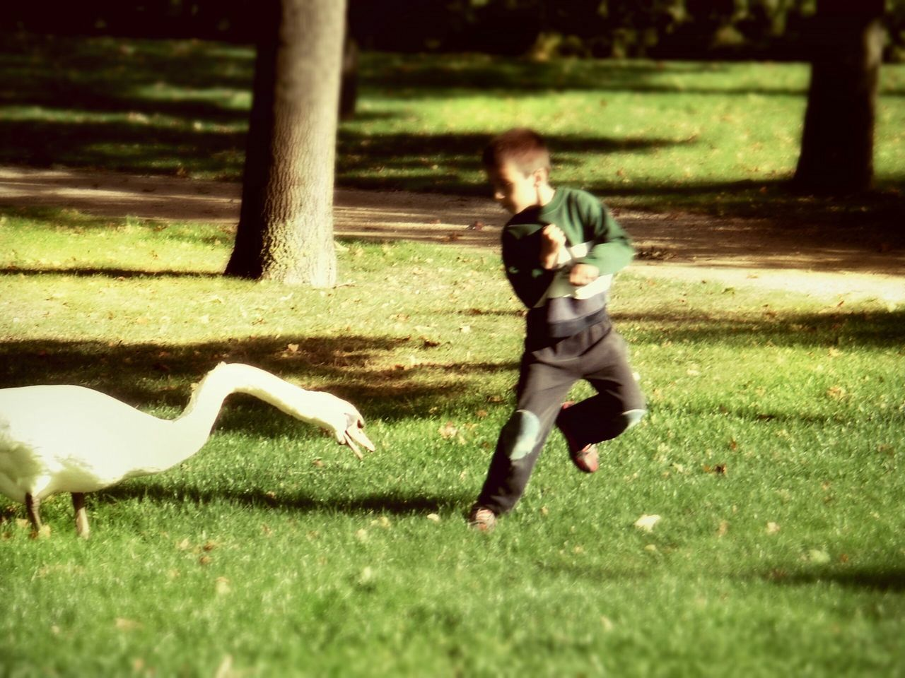 Full Length Of Playful Boy With Swan On Grassy Field
