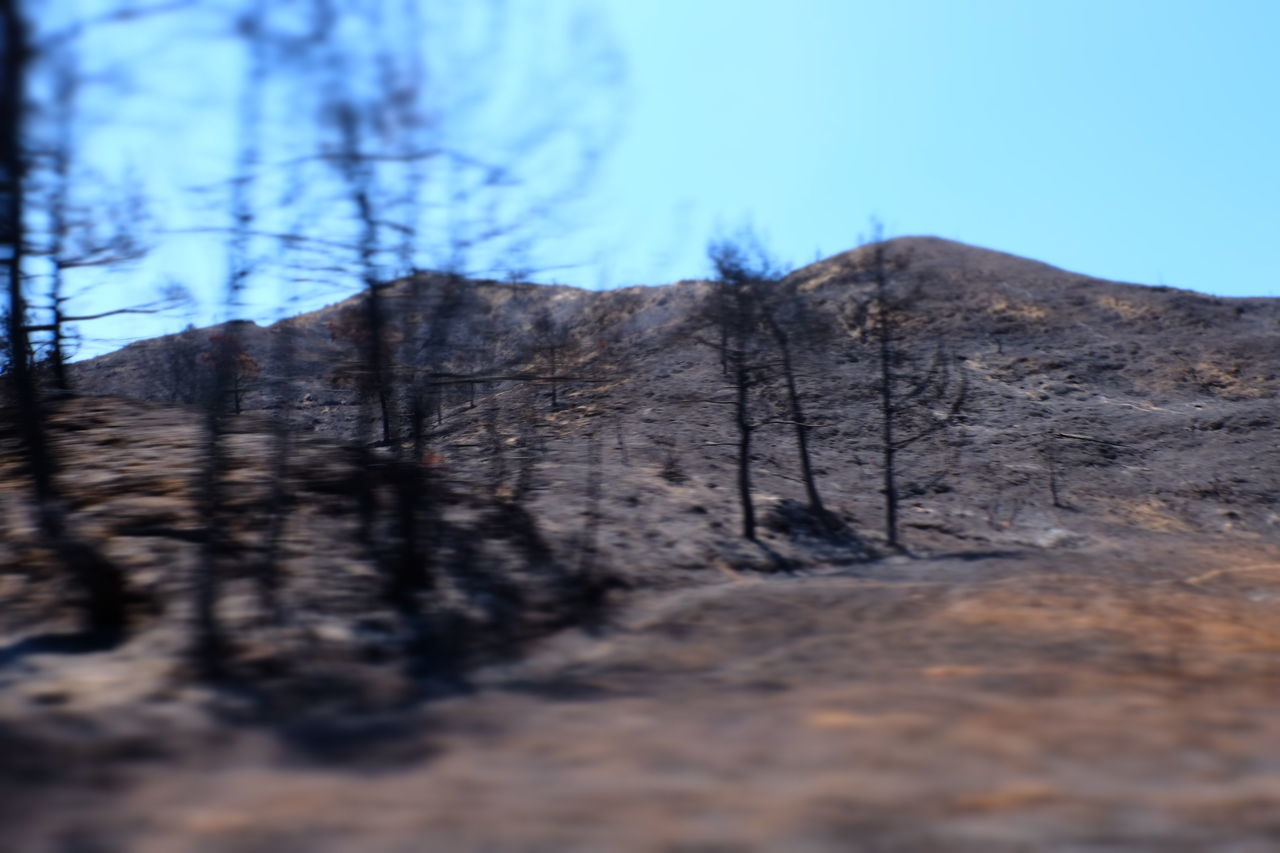 After The Fire Beauty In Nature Clear Sky Cloud - Sky Day Dried Plant Low Angle View Mountain Nature No People Non-urban Scene Outdoors Physical Geography Remote Scenics Selective Focus Solitude Tranquil Scene Tranquility Tree Tree Trunk WoodLand