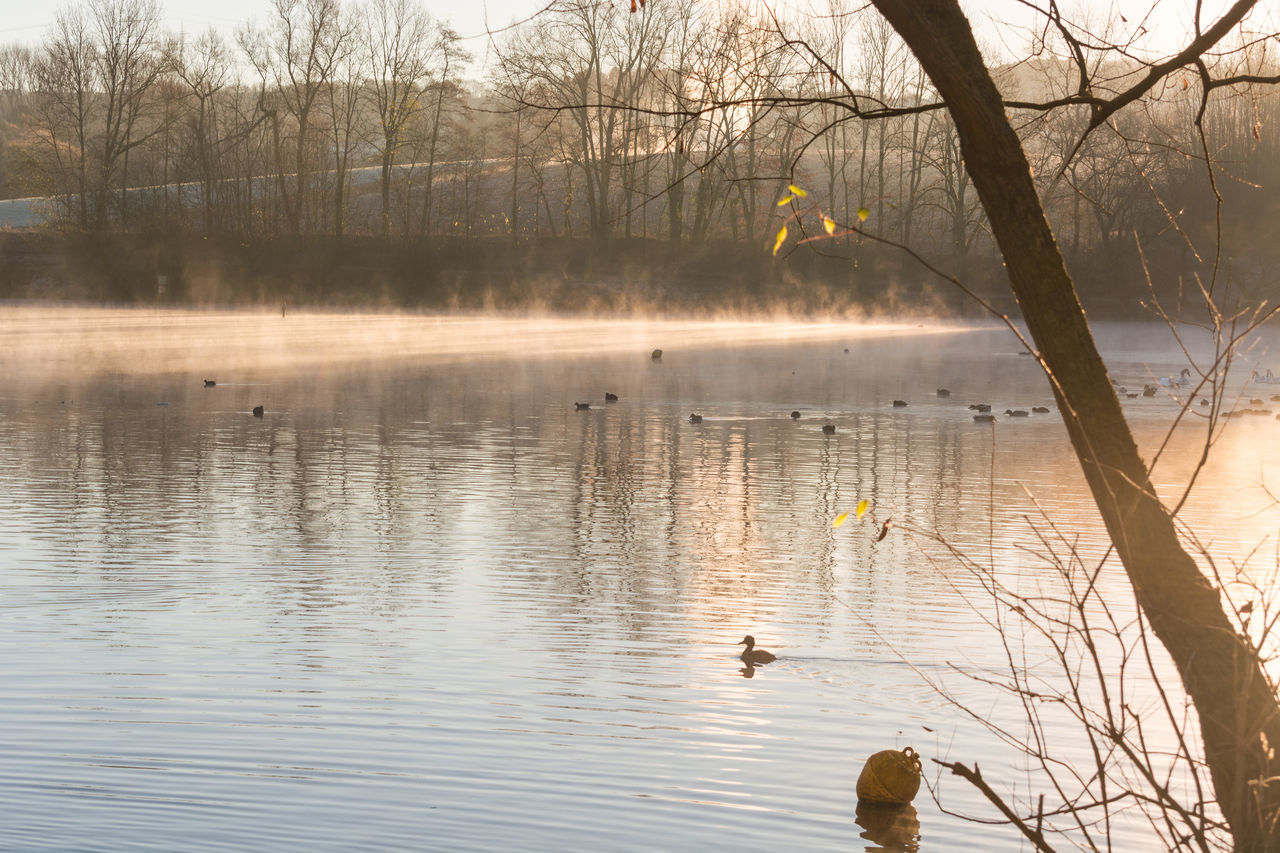 Morning fog and sun reflection on a small lake Abtskuecher pond called in Heiligenhaus, Germany. Animal Themes Animal Wildlife Animals In The Wild Beauty In Nature Bird Close Range Day Fog Lake Morning Mist Nature No People One Animal Outdoors Portrait Reflection Scenics Sky Sunrise Swan Swimming Tranquil Scene Tranquility Tree Water