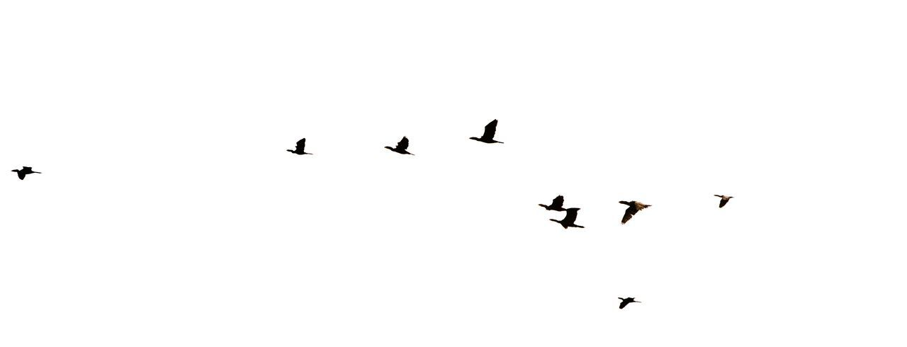 Flying Bird Animals In The Wild Animal Themes Low Angle View Outdoors Spread Wings Beauty In Nature Animal Wildlife Composition