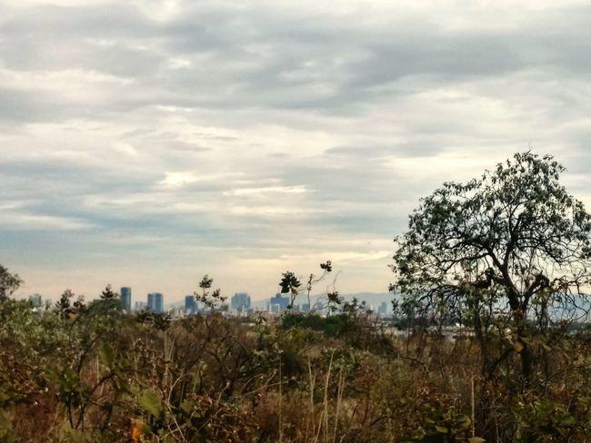MorningGray Ciudad de México vista desde Ciudad Universitaria