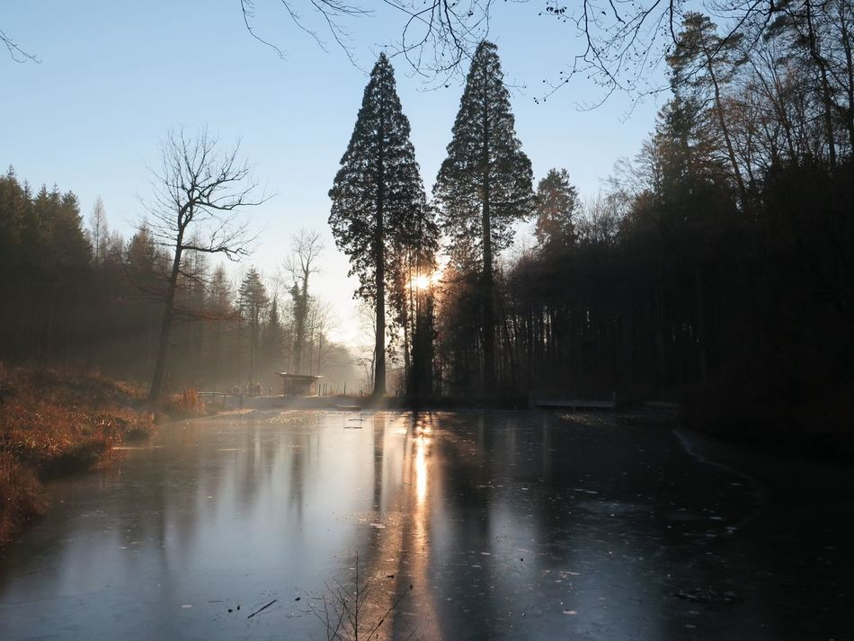 Frozen Ponds Warm Colors Warm Lighting Evening Sun Forest Photography Frozen Nature Sunlight Cold Days Winterthur Switzerland