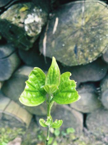 Plant Plants 🌱 Green Color Green Nature Natur Garten Garden Spring