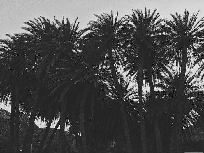 Melancholic Landscapes Palm Tree Tree Low Angle View Growth Tree Trunk Palm Frond No People Nature Beauty In Nature Outdoors