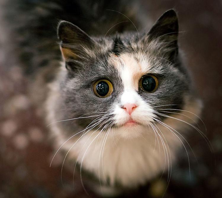 Trafo Görev Cat