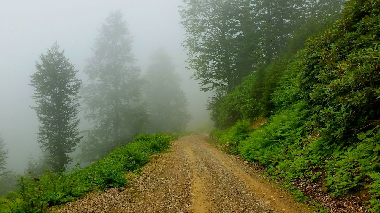 nature, tree, the way forward, fog, foggy, beauty in nature, mist, tranquility, growth, tranquil scene, weather, scenics, day, green color, landscape, no people, outdoors, plant, forest, road, hazy, cold temperature, grass, sky