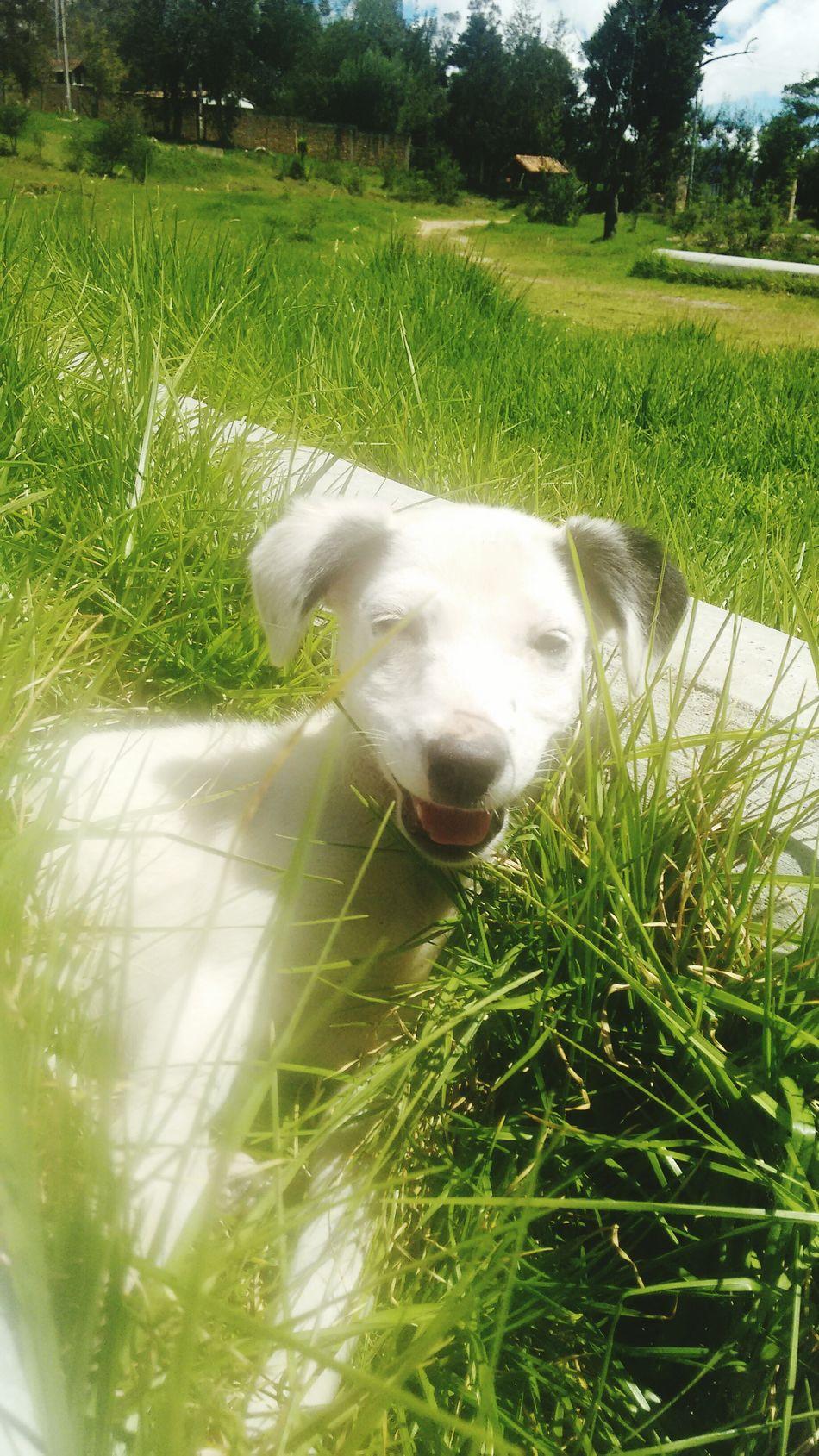 Perroloco PerrosBuenos Perro❤ Perro :33 Perrofeliz Pasto Perro