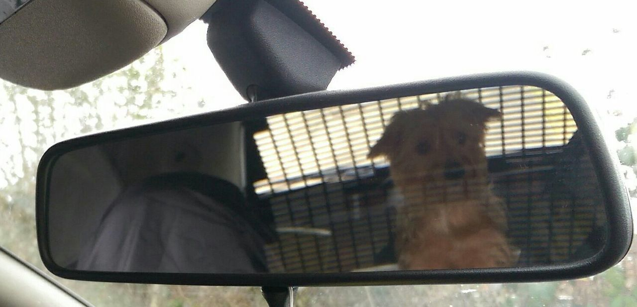 Objects In Mirror Are Closer Than They Appear Dogslife Outandabout Just For Fun Hello World Buster Taking Photos