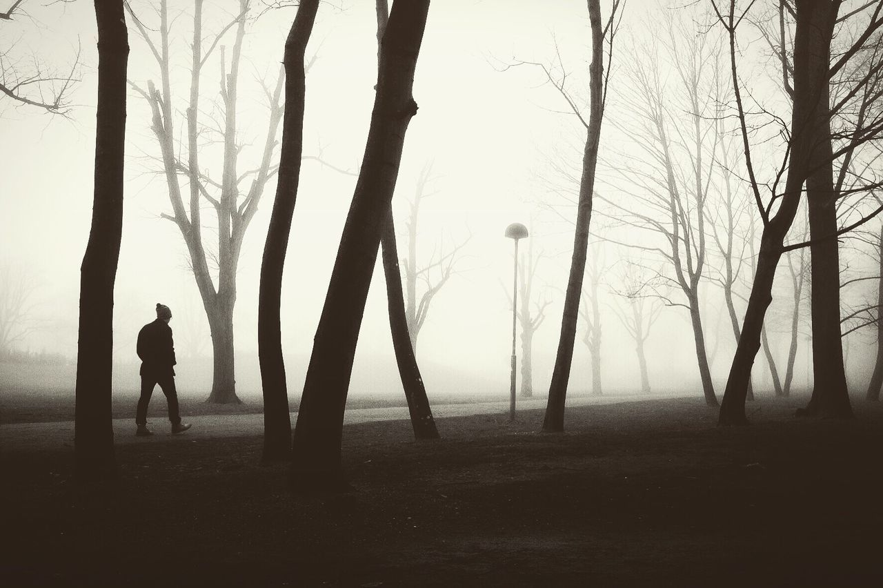 Silhouette Tree Fog Outdoors Nature Scenics Monochrome Street Photography Darkness And Light Landscape
