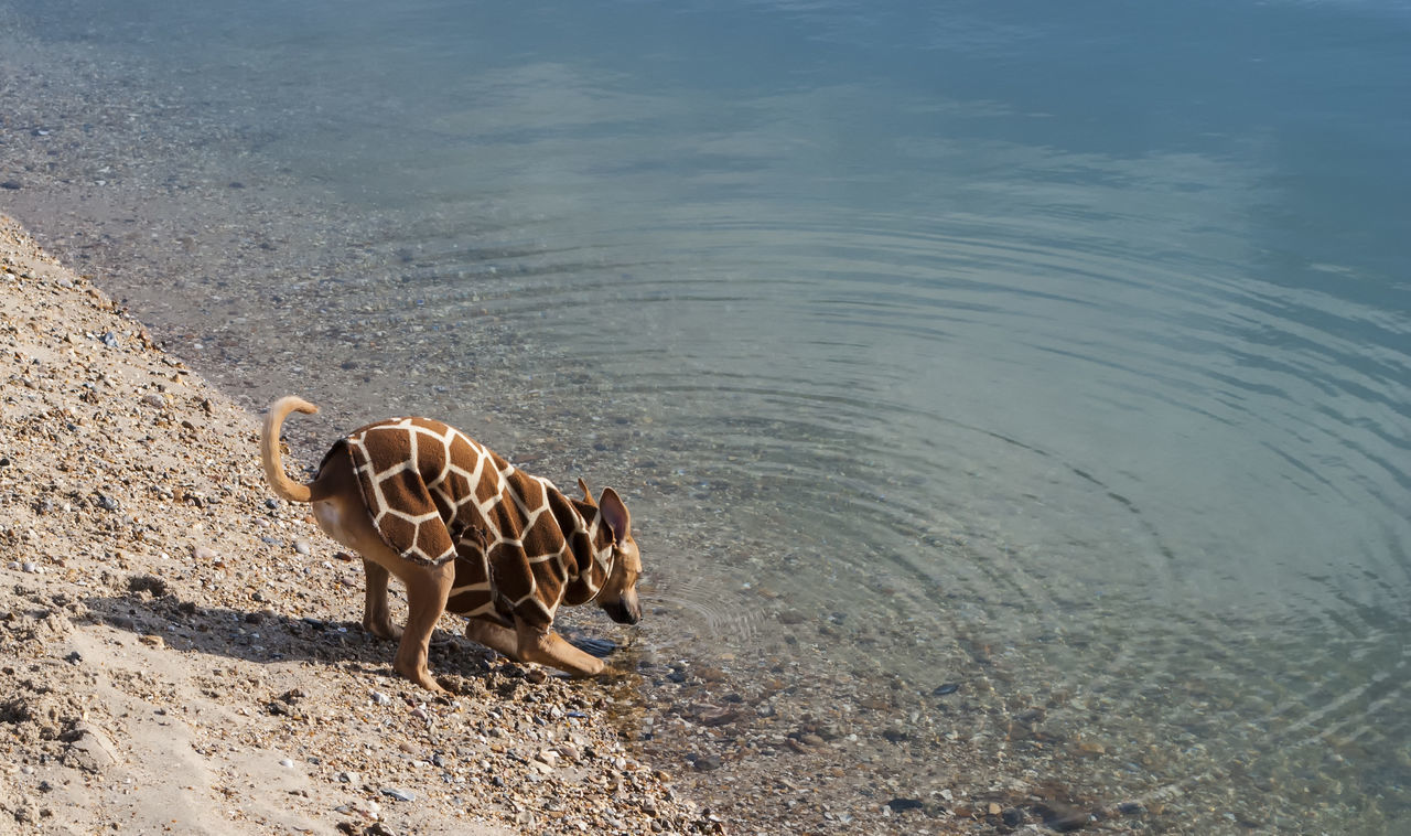 animal themes, animals in the wild, mammal, animal wildlife, day, no people, one animal, outdoors, nature, young animal, standing, water