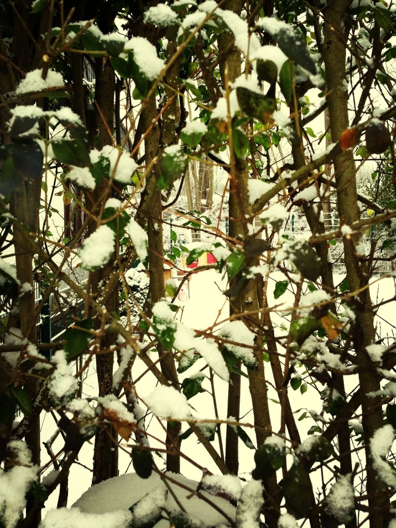 Springtime Snow