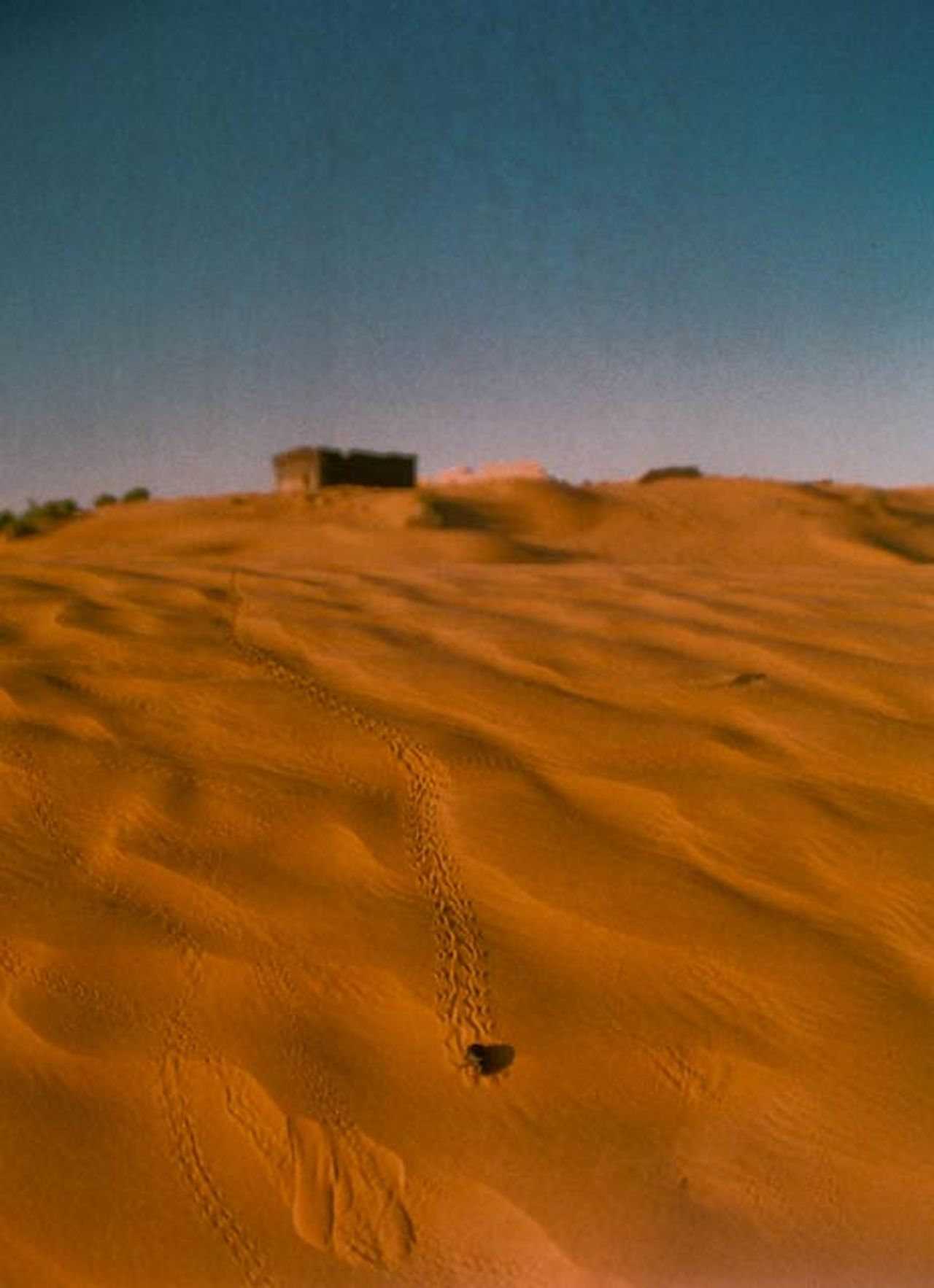 Arid Climate Desert Insect Insect Tracks No People Relief Sand Sand Dune Sky