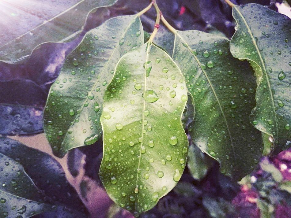 Look deep into nature, and then you'll understand everything better!!! Leaf Nature WaterDrop RainDrop Freshness EyEmNewHere New Talent Gallery New Talents On EyeEm New Talent This Week EyeEm Nature Lover Beauty In Nature