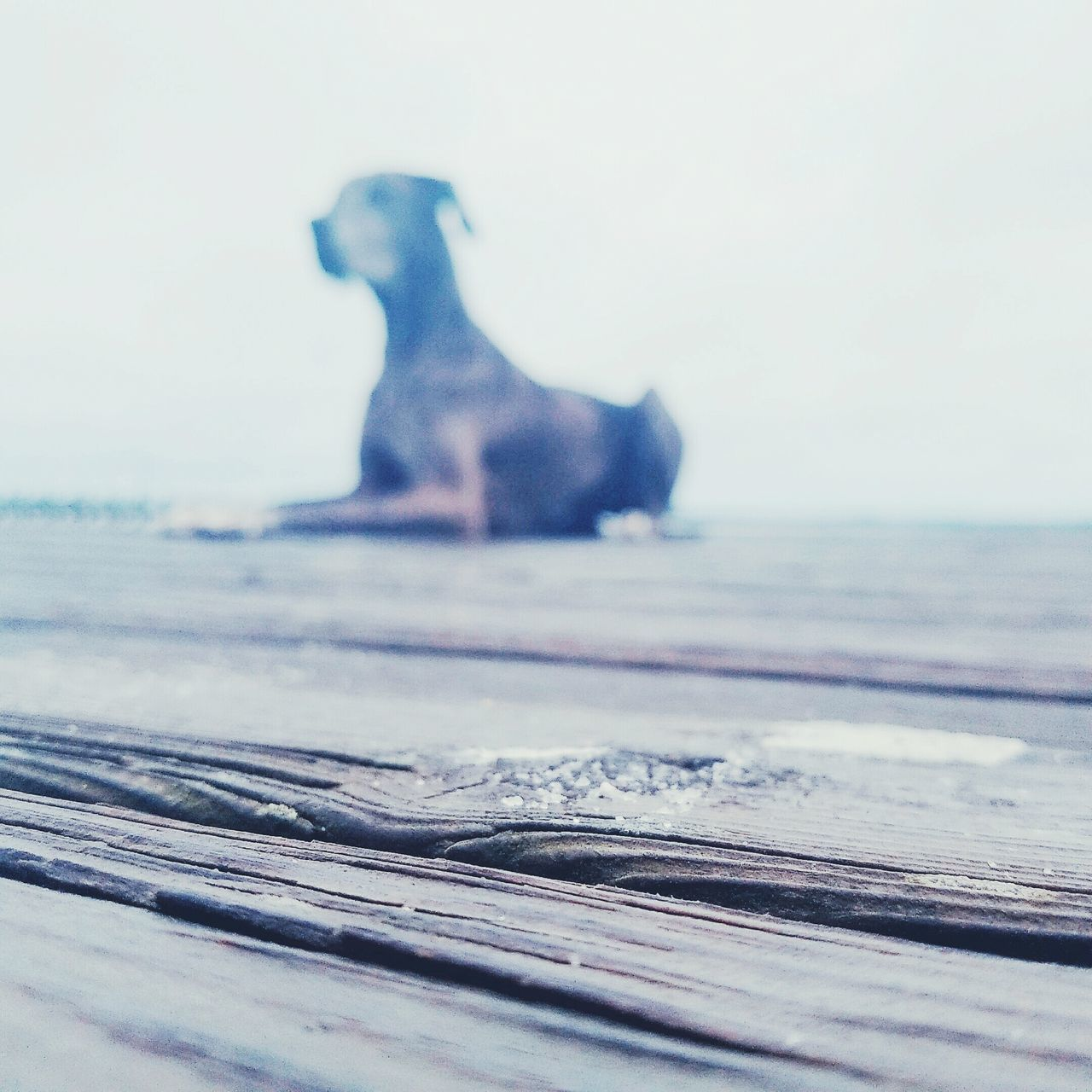 Dog Dog Love Doglover DogLove Doggy Dock Dockside Beach Beachphotography Relaxing Taking Photos Check This Out Cloudy Enjoying Life Water_collection Naturelovers Wood - Material Love It Sillouette Dogsillouette