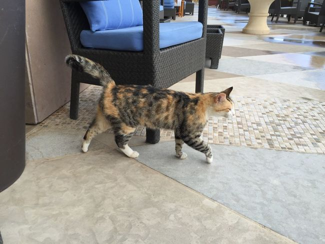 High society cat from the hotel Astir Palace. Greece Photos Athens Animal Themes Pets Feline Domestic Cat Animal Behavior