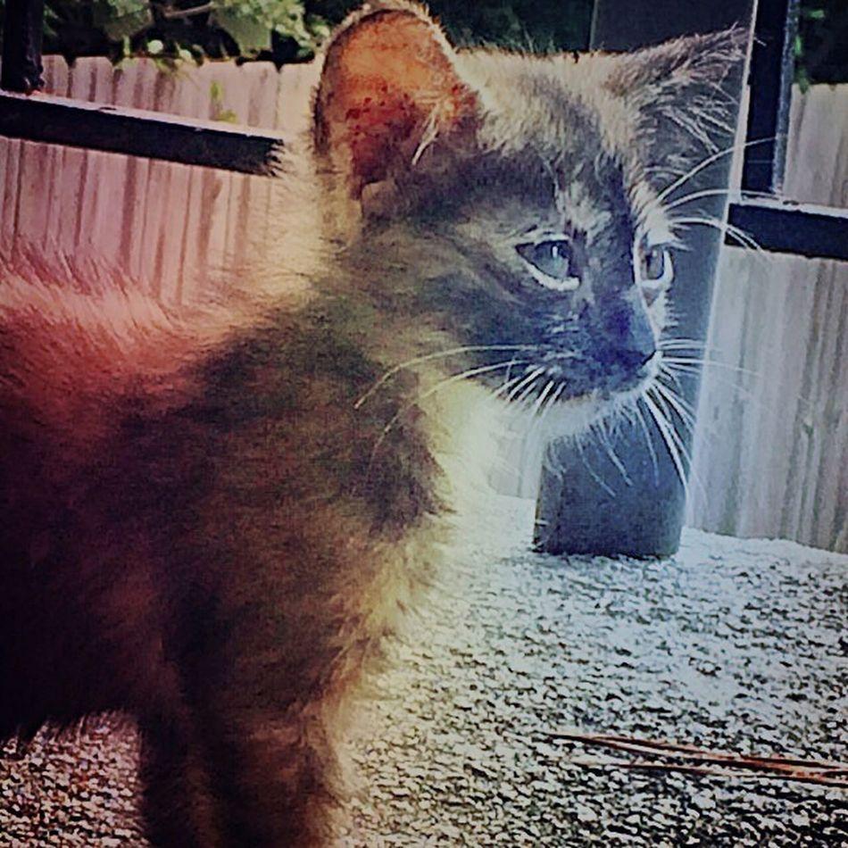 SAKI: Concrete Jungle Lioness pets feline cats love beautiful meow regal majestic ancient