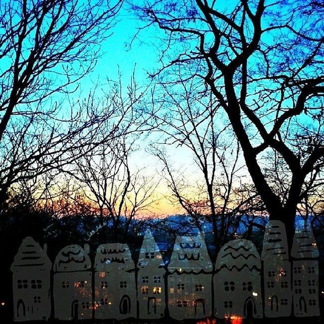 Gdynia Sunset Winter Trees