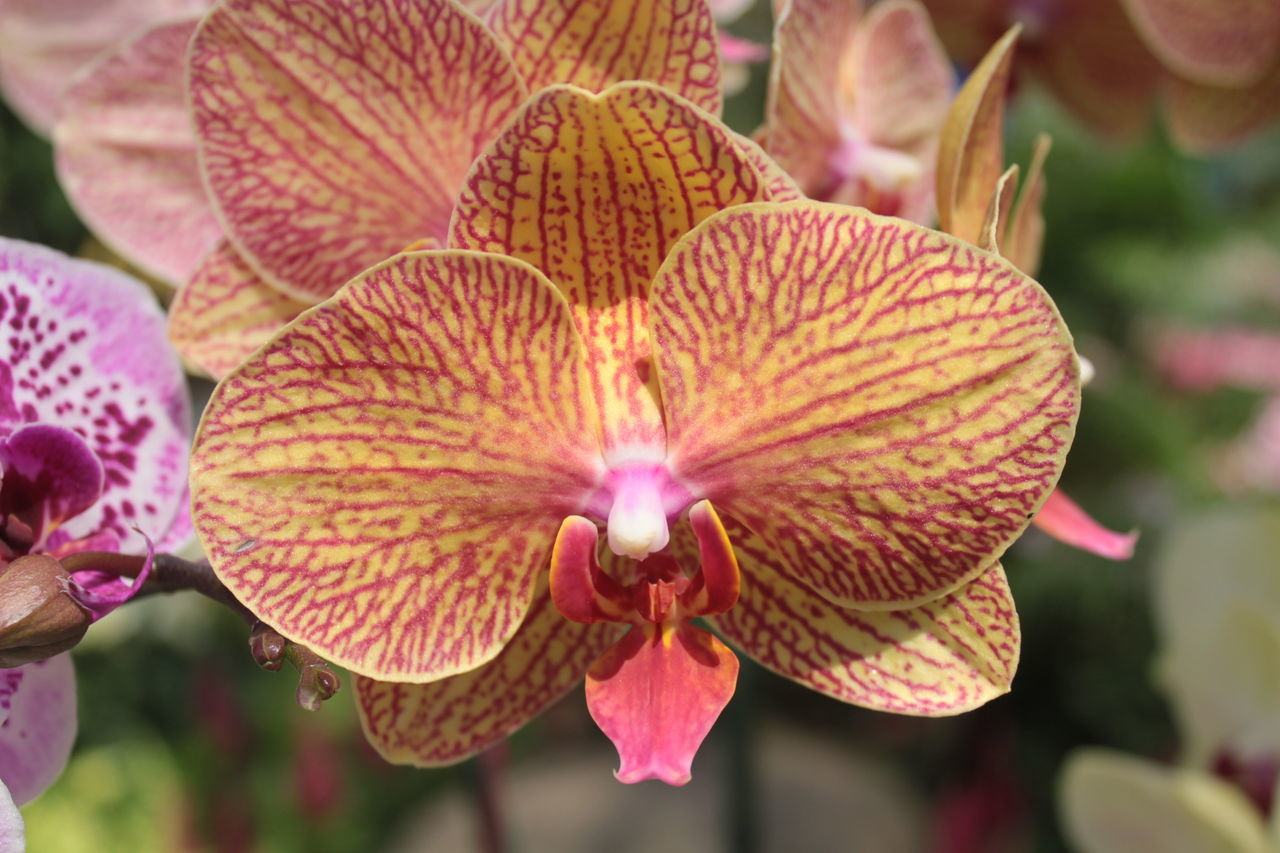 กล้วยไม้ Orchid Beauty In Nature Close-up Day Flower Fragility Freshness Nature No People Orchid Orchid Blossoms Orchid Flower Orchids