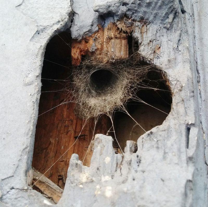 Spider Spider House Back Garden Spiders