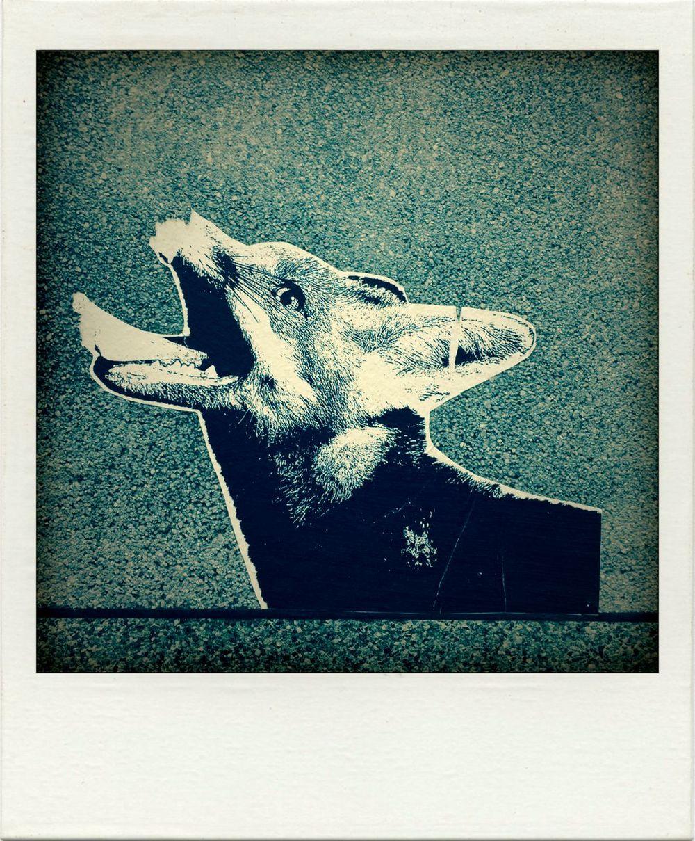 Streetphotography Strret Art Photocopy Fox