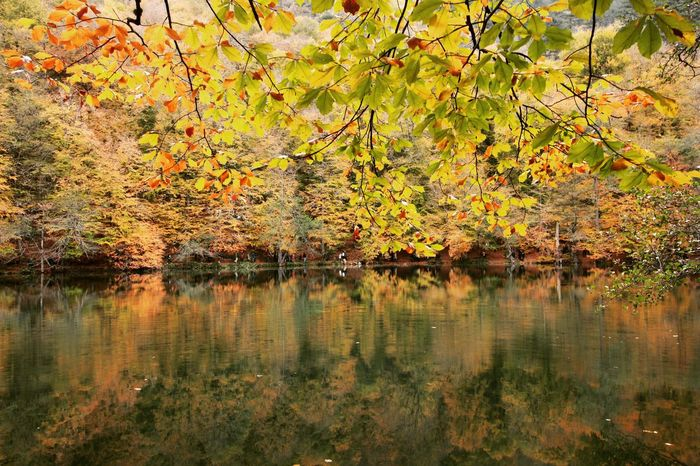 Reflection Tree Nature Beauty In Nature Outdoors Lake Water No People Leaf Day Growth Scenics Tranquil Scene Tranquility Branch Green Color Autumn Reflection River EyeEmNewHere Turkey Forest Sonbahar Yedigoller Autumn Perspectives On Nature