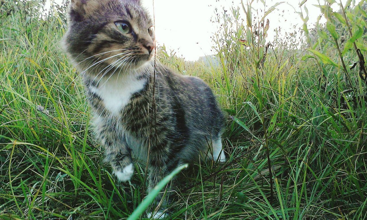 Model cat) Ukraine 💙💛 Svitiaz Lake Sulikopics Nature Grass Cat Outdoors Landscape Welcome To Ukraine Trekking EyeEmNewHere EyeEmCatlovers EyeEmBestPics EyeemPhotos