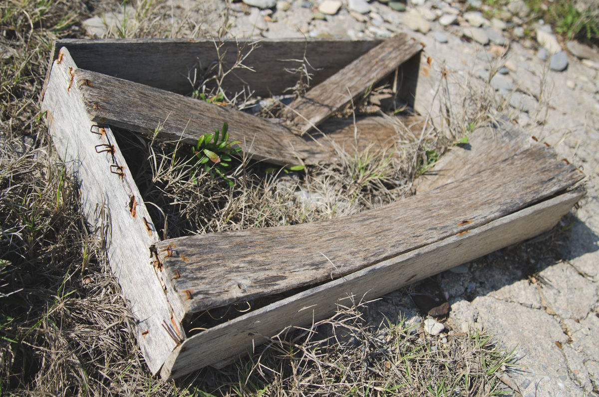 Beach Debris Broken Wood New Shoots Old Box Plant Plant Growth Rusty Nails Sand Sea Wooden Boards Wooden Box Wooden Crate