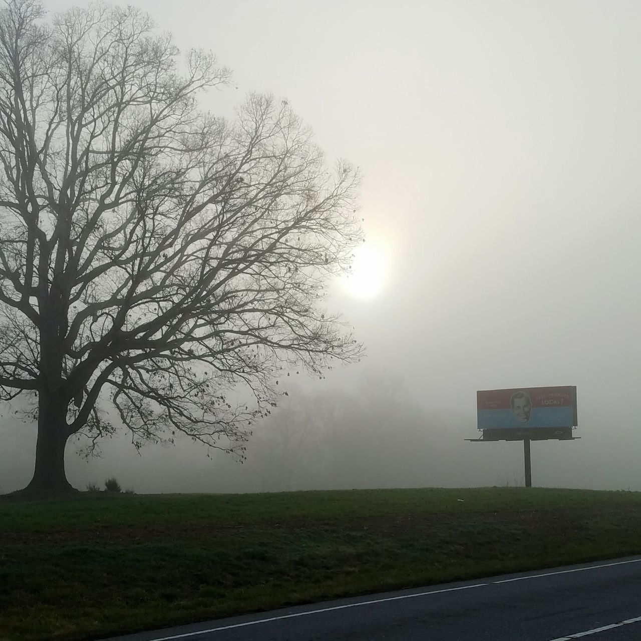 Tree Sun Local Sign Tree Sun Sunny Sunshine Sunthroughtrees Sunthroughclouds Bright Sign Local NC Country Minimalism Sky Grass Green Road Fog Foggy Driving Branches Branches And Sky Leaves Morning Beautiful No People