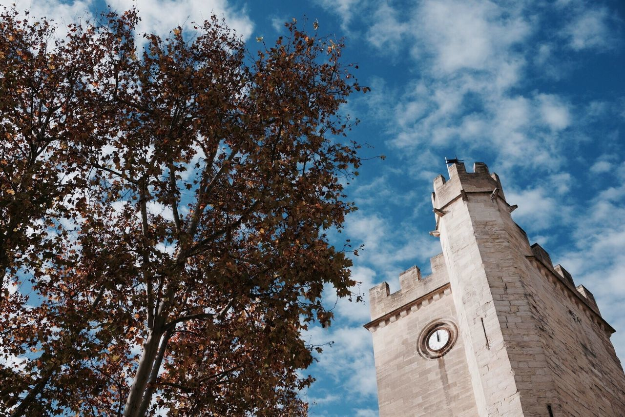 Low Angle View Of Trees And Clock Tower Against Sky