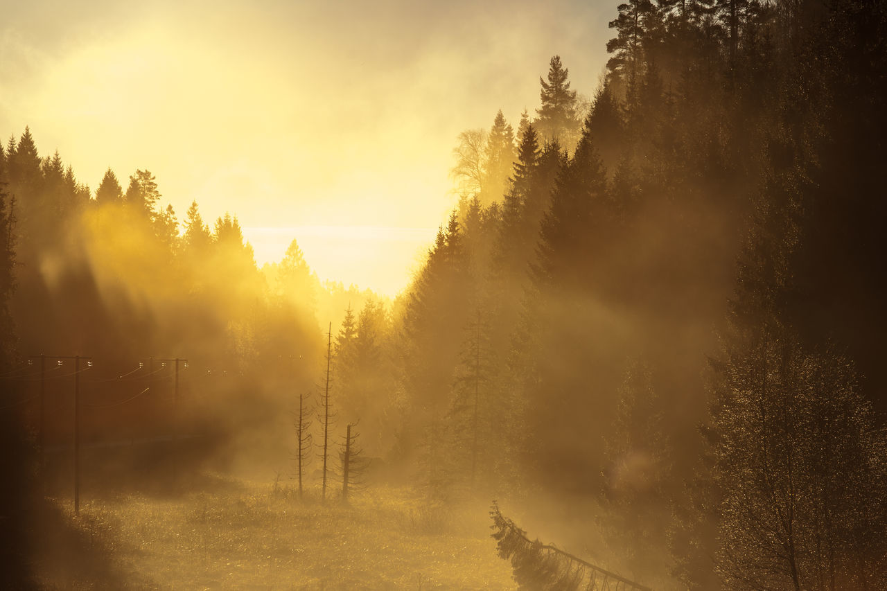 Misty forest Beauty In Nature Cold Temperature Day Fog Landscape Langangen Mist Mystic Nature No People Norway Norway🇳🇴 Outdoors Sunrise Tree Yellow