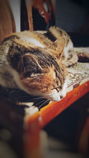 Pets Domestic Animals One Animal Animal Themes Mammal Indoors  Domestic Cat Day Close-up No People Vet