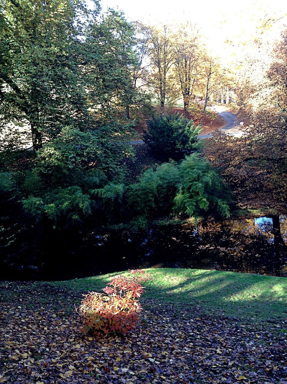 autumn, nature, tree, change, leaf, beauty in nature, tranquility, no people, outdoors, growth, day, plant, scenics, grass