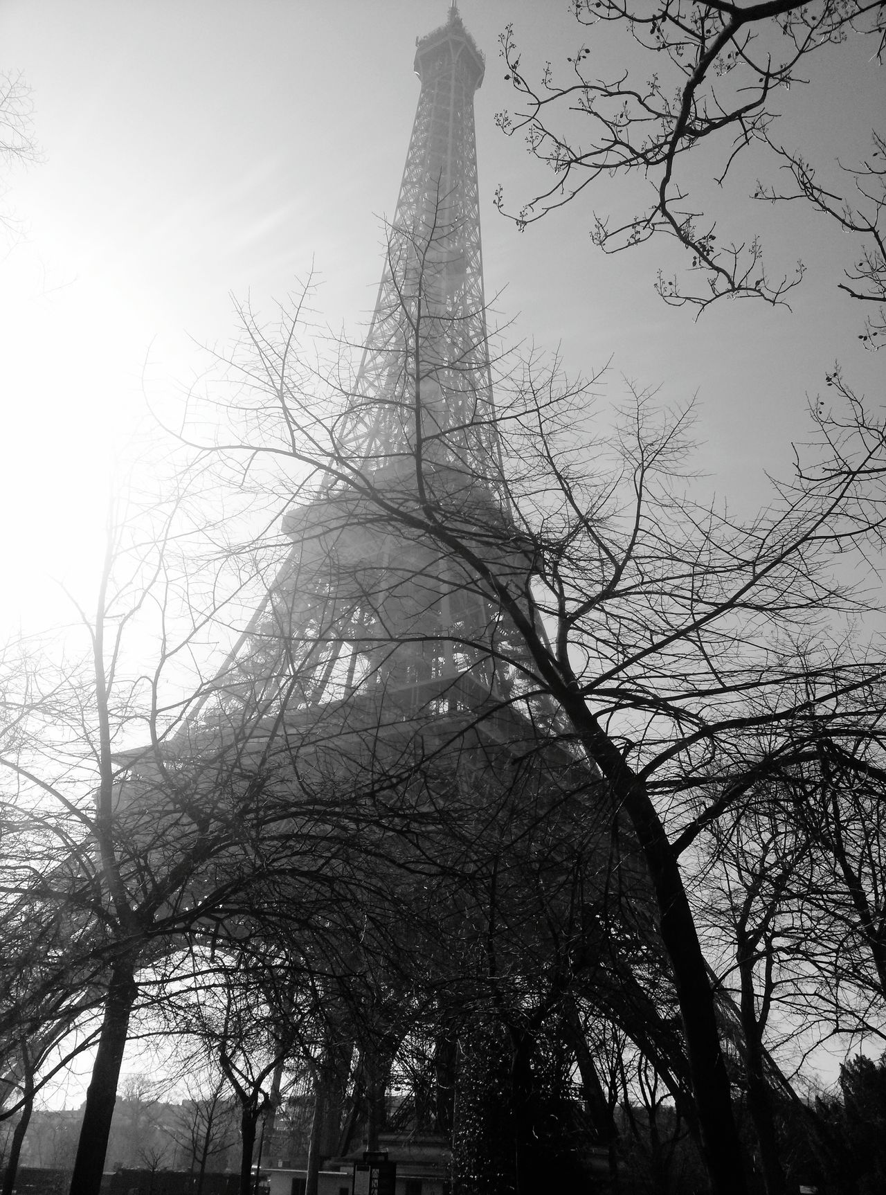 Tourist Attraction  Tourism Travel Photography Travel Historical Building Building Exterior Architecture Art Built Structure Tree Outdoors Cloud - Sky Travel Destinations Low Angle View Paris Eiffel Tower Branch France Day Sky Low Angle View Tree Black & White Black And White