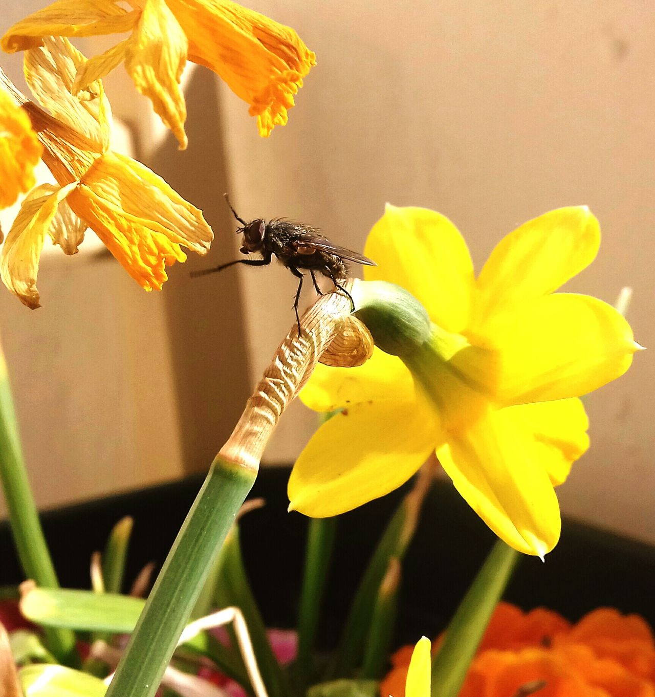 Fly Move Flower Yellow Plant Flower Head Nature No People Animal