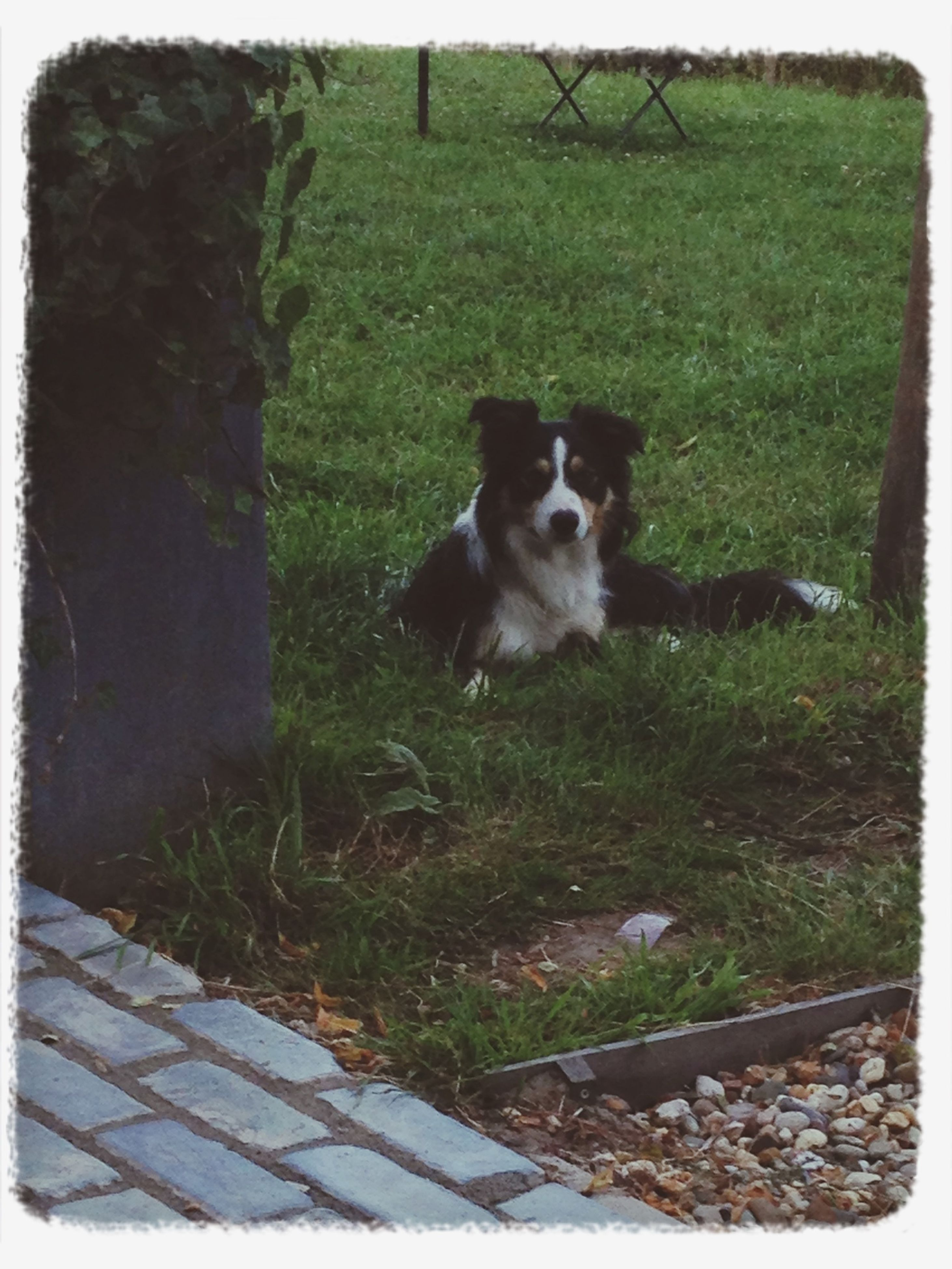 transfer print, pets, one animal, domestic animals, animal themes, mammal, auto post production filter, domestic cat, dog, cat, sitting, plant, grass, looking at camera, feline, full length, outdoors, portrait, day, front or back yard