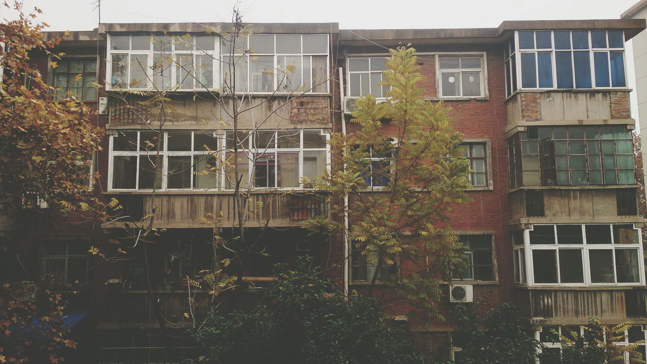 building exterior, architecture, built structure, window, residential building, building, residential structure, house, city, tree, apartment, day, low angle view, outdoors, plant, balcony, no people, growth, ivy, exterior