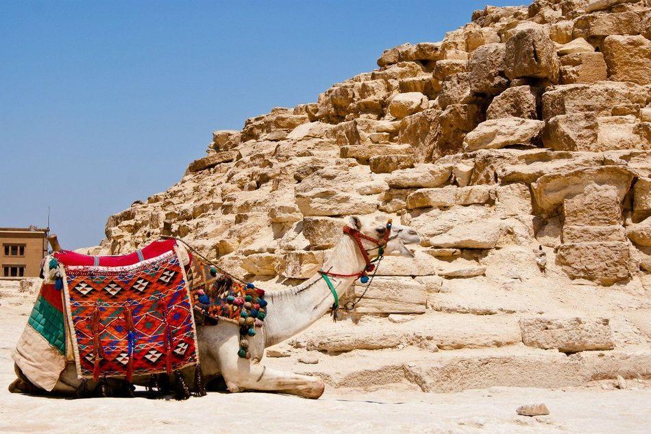 Beautiful stock photos of egypt, Adult Animal, Animal Themes, Beach, Camel