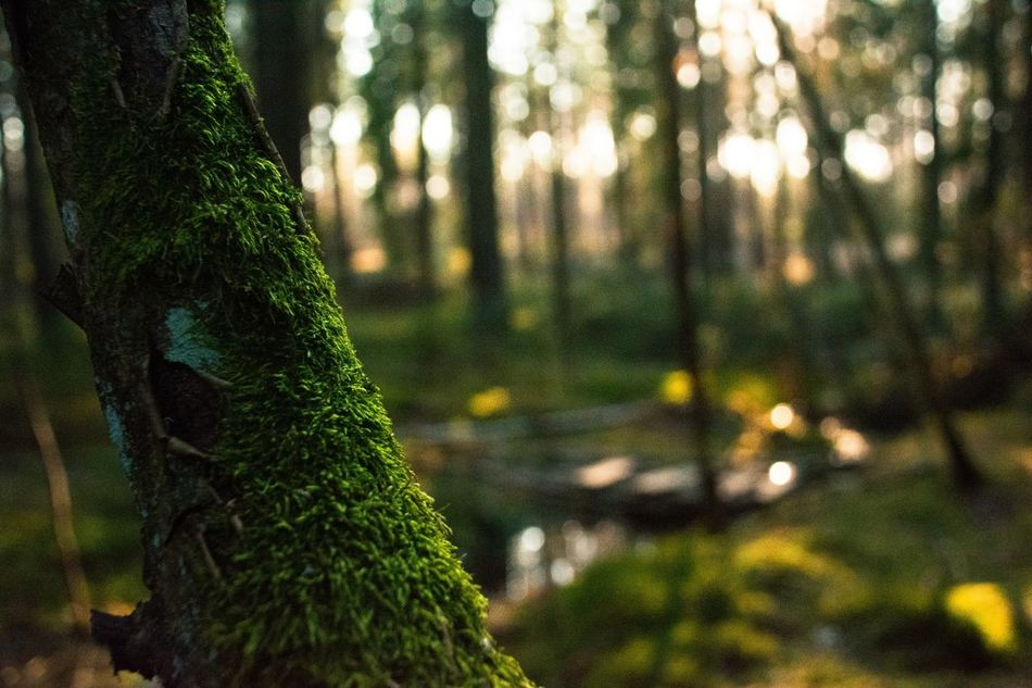 Beautiful stock photos of tree, Close-Up, Covering, Day, Focus On Foreground