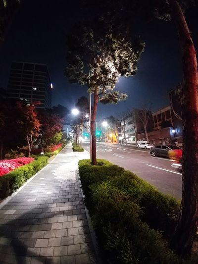 Night Outdoors Car Street Light Tree Illuminated No People Water City Sky