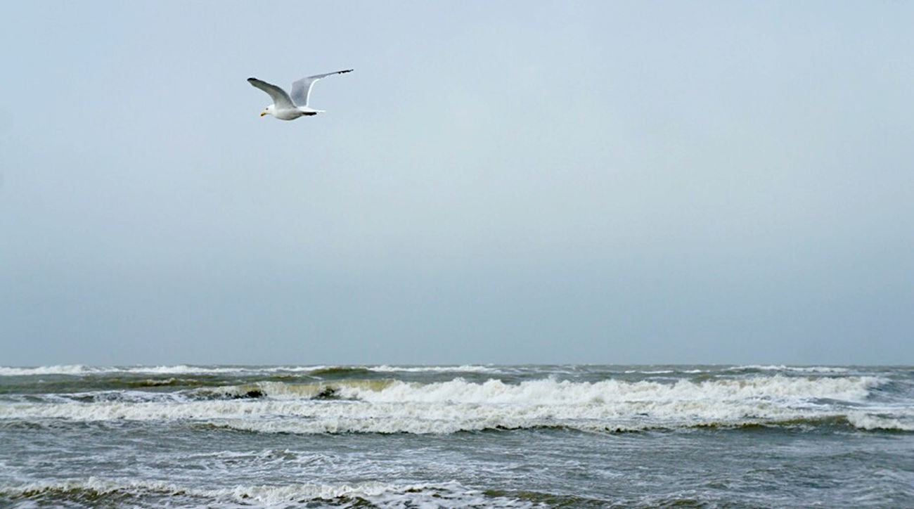 Sea Beach Animal Themes Flying Bird No People Wave Motion Outdoors Clear Sky Day One Animal Sunnydays