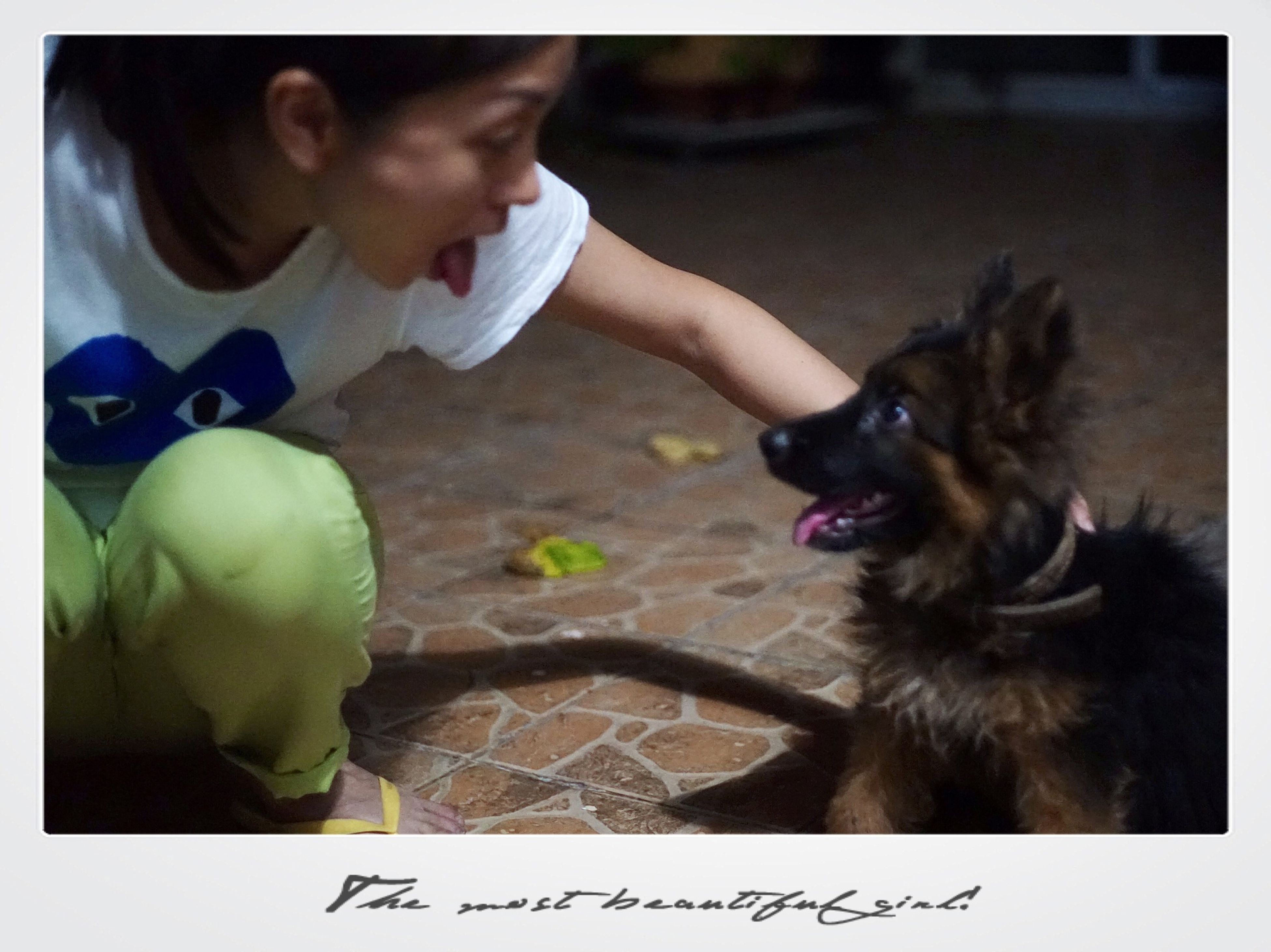transfer print, auto post production filter, animal themes, pets, lifestyles, one animal, domestic animals, leisure activity, dog, person, holding, togetherness, playing, childhood, mammal, playful, pet owner, girls