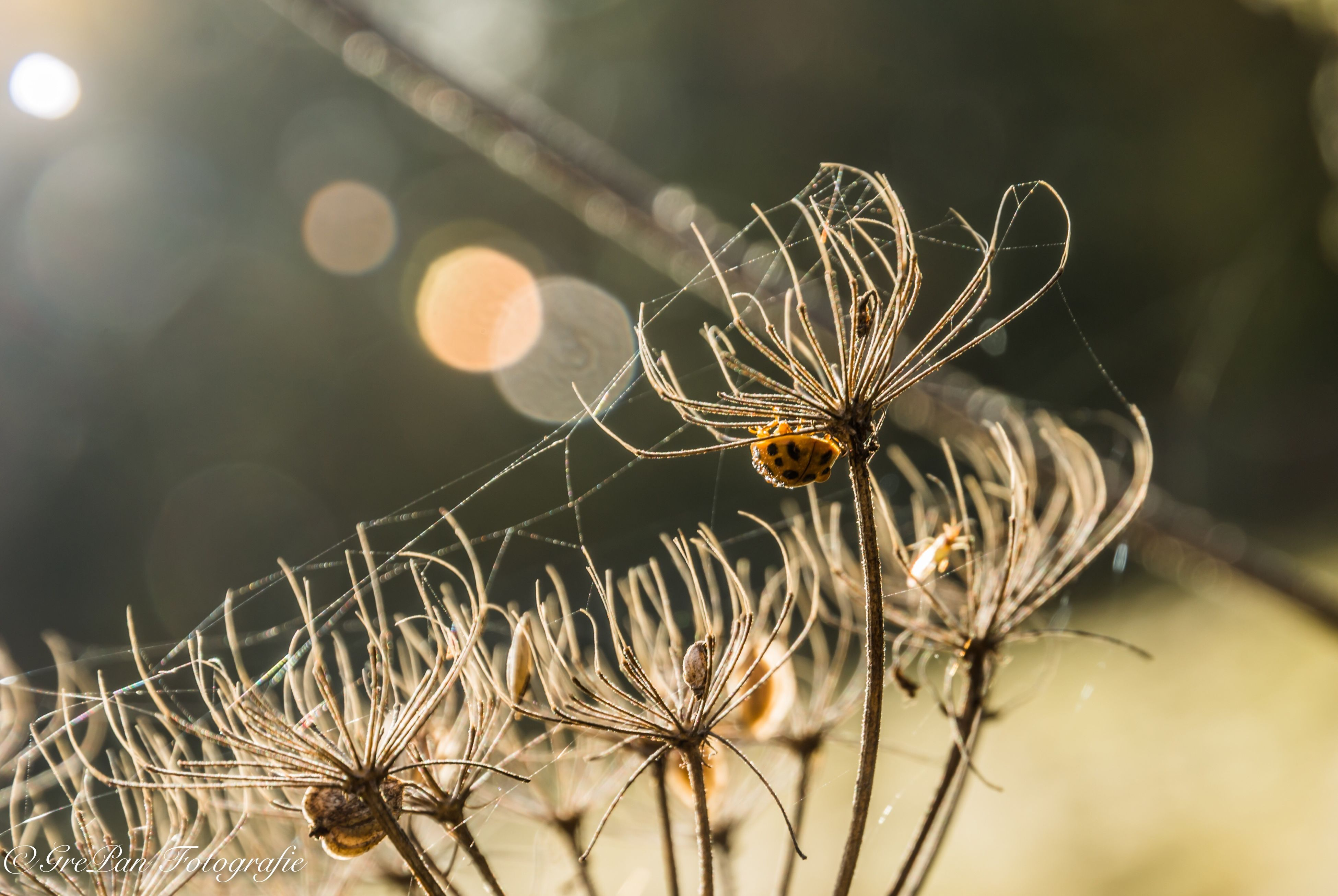 focus on foreground, spider web, nature, close-up, one animal, spider, no people, insect, outdoors, animals in the wild, animal themes, fragility, day, beauty in nature, web