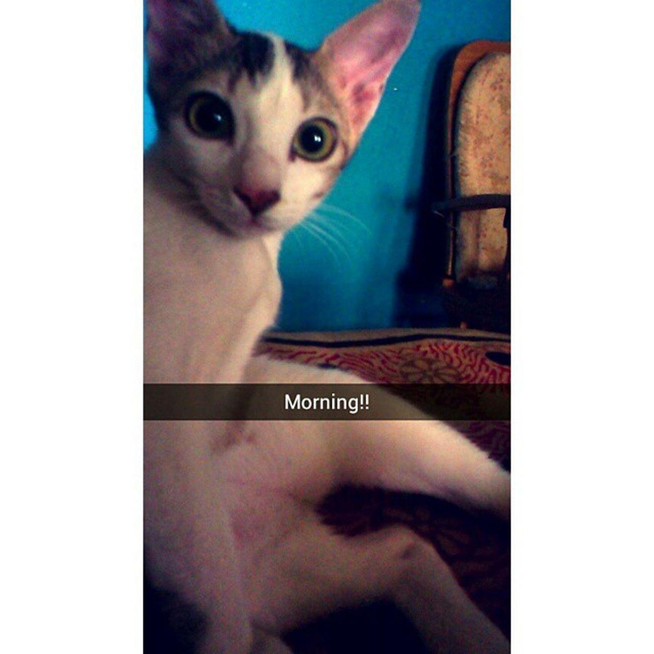Snapchat Cat Catlovers . Petstagram @TagsForLikes Snap Chat Tagsforlikes Snapchatme Tflers Snapchatmenow Snapchatit Snapchatster Instagood Snapchatmeimbored Photooftheday Snapit Snapchatmemaybe Instasnapchat Letssnapchat