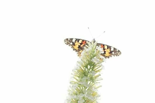 Glitch überbelichtet Butterfly Sky RePicture Growth Easter Ready Showing Imperfection The Essence Of Summer