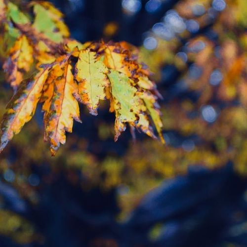 EyeEmNewHere Fall Leaf Autumn