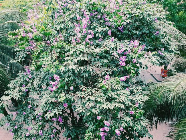 Sign of summer!!!! Summer MyUniversity Vietnamesegirl MyHanoi Flowers Trees Hanoian Green