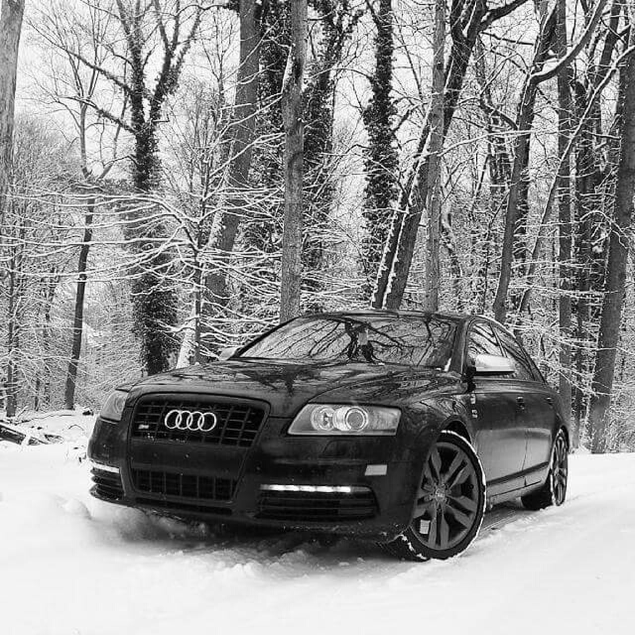 winter, snow, cold temperature, tree, car, transportation, forest, bare tree, no people, nature, outdoors, day