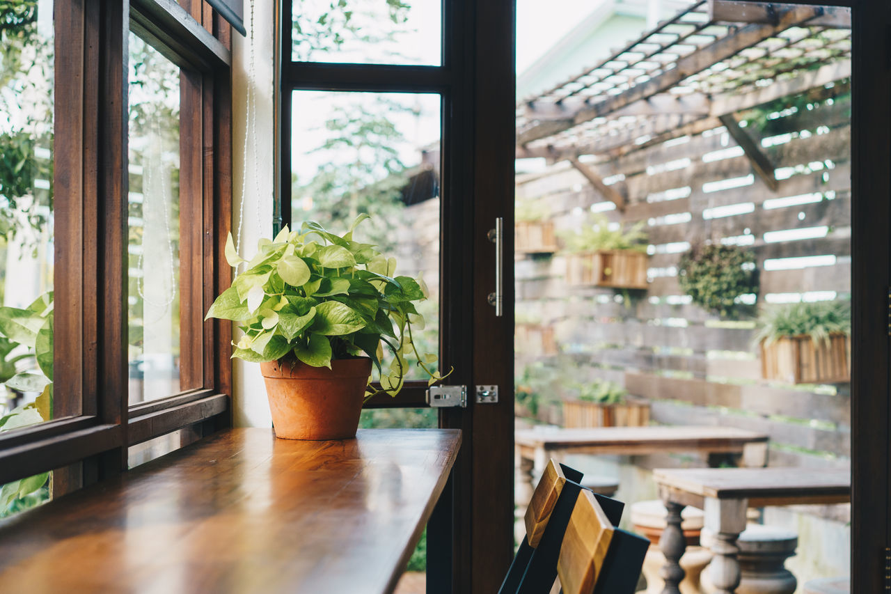 Green plant on table in the morning. Architecture Close-up Day Decoration Evergreen Green Color Growth Home Interior Indoors  Leaf Nature No People Plant Plant Potted Plant Table Window Wood - Material