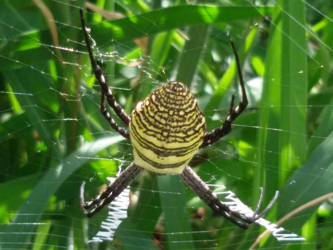 Animal Themes Animals In The Wild Close-up Crawling Focus On Foreground Fragility Green Green Color Insect Natural Pattern Nature One Animal Outdoors Spider Spiderweb Web Wildlife
